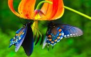 """Арт-практикум """"Из гусеницы в бабочку. Отращиваем крылья"""" (Москва)"""